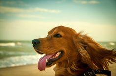 sea breeze by Mariya Ve - Photo 132267185 - 500px