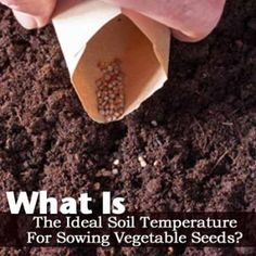 What Is The Ideal Soil Temperature For Sowing Vegetable Seeds?