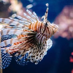 Poisson d'Avril !    #fish #april #aquarium #paris #poisson #avril http://fb.me/konzy.me