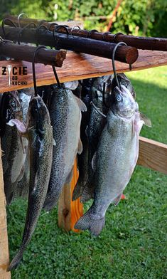Karp, Fish And Seafood, Natural Light, Catering, Grilling, Food And Drink, Cool Inventions, Catering Business, Gastronomia