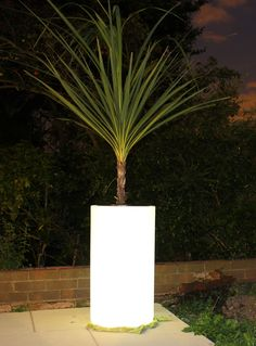 Illuminated Planter and Palm