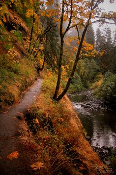 naturepunk: Eagle Creek Trail to Punchbowl Falls, Oregon. Photo by NaturePunk.