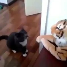 Funny Animal Memes, Funny Cat Videos, Funny Animal Pictures, Cute Funny Animals, Cat Memes, Cute Baby Animals, Animals And Pets, Cute Cats, Funny Cats
