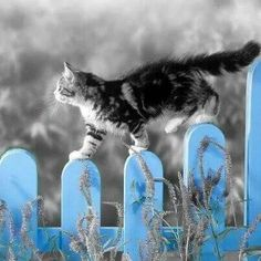 Cat on the fence...