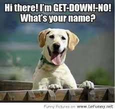 30 Funny animal captions - part 13 pics), animal pictures with captions, funny memes - That's my dog's name too! Funny Shit, Funny Cute, The Funny, Funny Stuff, Funny Lady, Super Funny, Animal Captions, Funny Captions, Funny Dog Names
