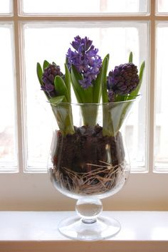 I love The Art of Doing Stuff! #5 ... Ways to display hyacinths