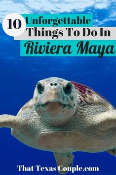 Costa Rica, Europe Destinations, Honeymoon Destinations, Fun Facts About Turtles, Sea Turtle Facts, Ukraine, Turtle Book, Leatherback Turtle, Stuff To Do