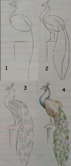 Kids art. Drawing lessons for beginners - A PEACOCK