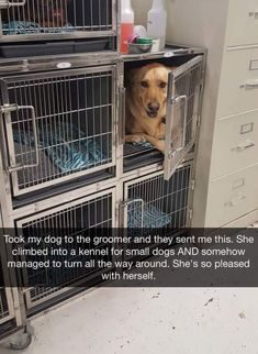 Dogs are so funny and hilarious, they just never fail to make us laugh and happy! Just look how all these dogs and puppies play, sleep, get along with cats, . Funny Animal Memes, Cute Funny Animals, Dog Memes, Funny Animal Pictures, Cute Baby Animals, Funny Cute, Funny Memes, Hilarious Pictures, Funny Captions