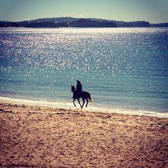"3 Fun Ways To Celebrate National ""I Love Horses Day"""