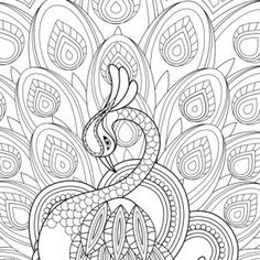 Adult Coloring Pages Peacock 2