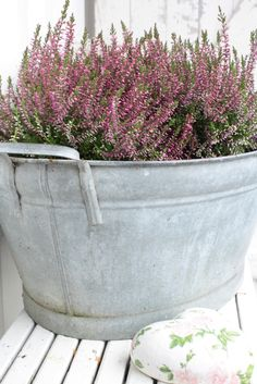 Plant your heather in old galvanized tins and pots for a great look