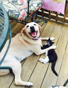 Many dogs and cats can coexist peacefully, but you'll keep everyone safe and make life much less stressful if you plan carefully when looking for a new pet, and introduce the newcomer slowly and… Happy Animals, Animals And Pets, Funny Animals, Cute Animals, Wild Animals, Farm Animals, Puppies And Kitties, Cute Puppies, Cats And Kittens
