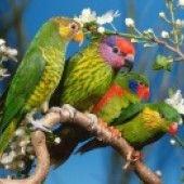 Ideas for green bird wallpaper colour Parrot Wallpaper, Animal Wallpaper, Hd Wallpaper, Paradise Wallpaper, Wildlife Wallpaper, Drawing Wallpaper, Computer Wallpaper, Photo Wallpaper, Flower Wallpaper