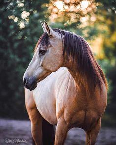 Photo by: @lara.soetebeer.photography (instagram) Horseaddict