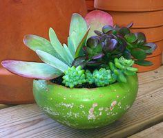 Green Clay Pot Succulents