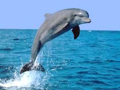 Regardless of what 13 year olds and over-emotional 19 year olds with dolphin tattoos on their ankles might believe, these ANIMALS are very dangerous.