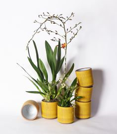 Meredith Metcalf Ceramics