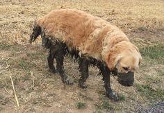 どうしてこうなった…笑!好奇心旺盛過ぎて困っちゃった犬たち 17選 - ペット日和