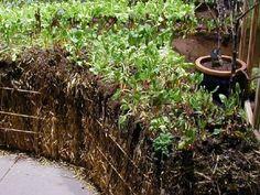hay bale garden!