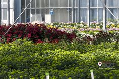 They educate the visitors with names of fascinating flowers and methods used to nurture each type of flowers especially the hydroponic methods.