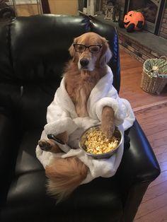 "Golden Retriever Halloween Costume ""Couch Potato"""