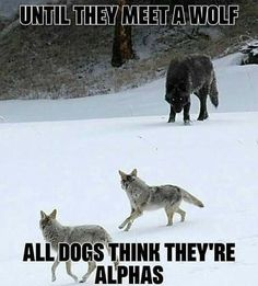 I must be the ultimate dog to you huh? -A I must be the ultimate dog to you huh? -A art breeds cutest funny training bilder lustig welpen Wisdom Quotes, True Quotes, Great Quotes, Inspirational Quotes, Motivational, Animal Quotes, Animal Memes, Funny Animals, Dog Quotes