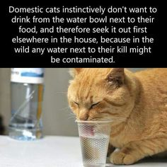 No wonder our dear late kitty drank from water in the bathroom