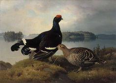 """""""Black Grouse, Cock and Hen"""" - """"Teeri, koiras ja naaras"""", 1883 – oil on canvas –   Ferdinand von Wright (1822-1906)  - Ateneumin taidemuseo"""