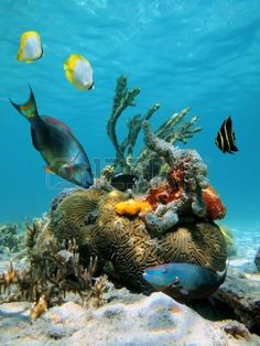 """ Water surface and marine life by Colorful fish and tropical marine life in the Caribbean sea "" Underwater Sea, Underwater Creatures, Underwater Painting, Colorful Fish, Tropical Fish, Fauna Marina, Life Under The Sea, Beneath The Sea, Sea Fish"