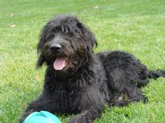 Scruffy looked like this except bigger and a little more...scruffily looking. RIP to my baby: Sept. 25 2001-July 6 2013