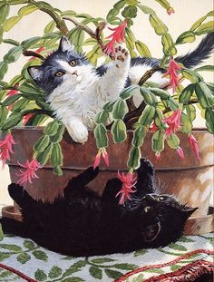 By  Persis Clayton Weirs.