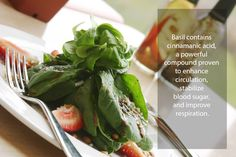 Basil contains cinnamanic acid, a powerful compound proven to enhance   circulation,   stabilize   blood sugar,   and improve   respiration.