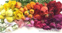 Ranunculus - Ocean View Flowers