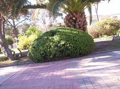 Toma de un arbusto realizada en la plaza San Martín.Autor: Kevin Imberti
