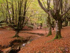 Paisajes para descubrir: Paisajes del País Vasco para descubrir