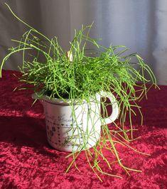 """Mini Gärtchen """"Country Flowers"""" Zimmerpflanze"""
