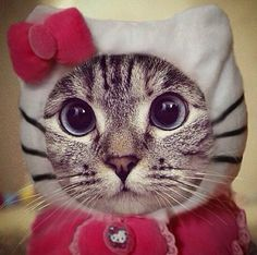 Real kitty - hello kitty