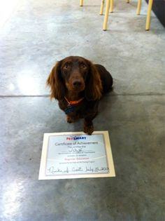 Jax graduated from pet smart training with flying colors!