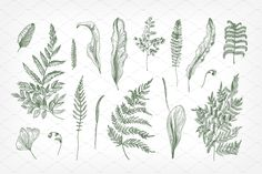 Set and seamless pattern with 17 ferns green foliage. Collection sprouts, frond, leaves and stems. - set: colorful and monochrome - 3 Hanging Ferns, Types Of Ferns, Cursive Tattoos, Fern Forest, Forest Tattoos, Fern Frond, Asparagus Fern, Modern Tattoos, Botanical Tattoo