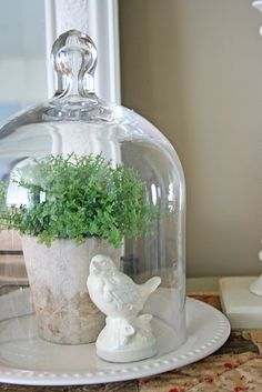 Easy spring decorating idea using a cloche jar. Apothecary Jars Decor, Cloche Decor, The Bell Jar, Bell Jars, Decorated Jars, French Country Decorating, Glass Domes, Cheap Home Decor, Vintage Decor