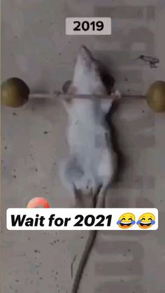 Really Funny Joke, Funny Vidos, Some Funny Jokes, Funny Facts, Funny Relatable Memes, Funny Videos Clean, Funny Prank Videos, Crazy Funny Videos, Funny Videos For Kids