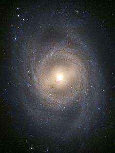 """New Supernova Found """"Next Door""""—Getting Brighter"""