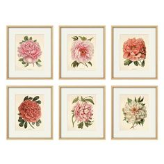 Art Antique, Art Vintage, Free Prints, Wall Prints, Peony Print, Classic Paintings, Pink Peonies, Botanical Prints, Hand Coloring