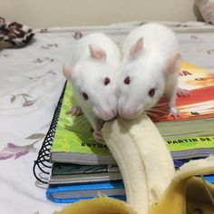 They love banana!