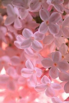 Flower Wallpaper, Nature Wallpaper, Wallpaper Backgrounds, Iphone Wallpaper, Beautiful Flowers Wallpapers, Pretty Wallpapers, Angel Aesthetic, Everything Pink, Love Flowers