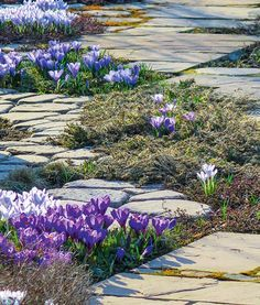 Проект сада от ландшафтного бюро Gardie   Проекты садов   Журнал «Дом и сад»