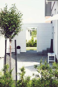 I love a simple, small tree in my garden. Outdoor Rooms, Outdoor Gardens, Outdoor Living, Outdoor Decor, Fire Pit Patio, Garden Architecture, Garden Fencing, Terrace Garden, Garden Inspiration