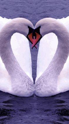 Swan Heart~
