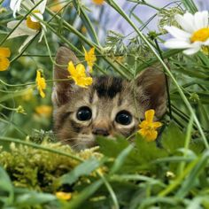 Spring is Here for the 1st time for this Kitten...galwp